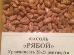 Фасоль оптом из Киргизии - фото 5