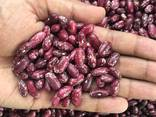 Red beans - photo 1